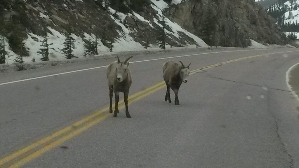 Canadian Road Block